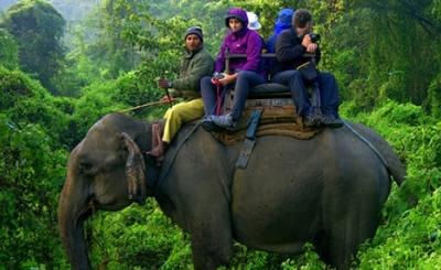 Nepal's rhino hunters become the hunted
