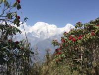 our Nepali National flower  with amazing mountain view .