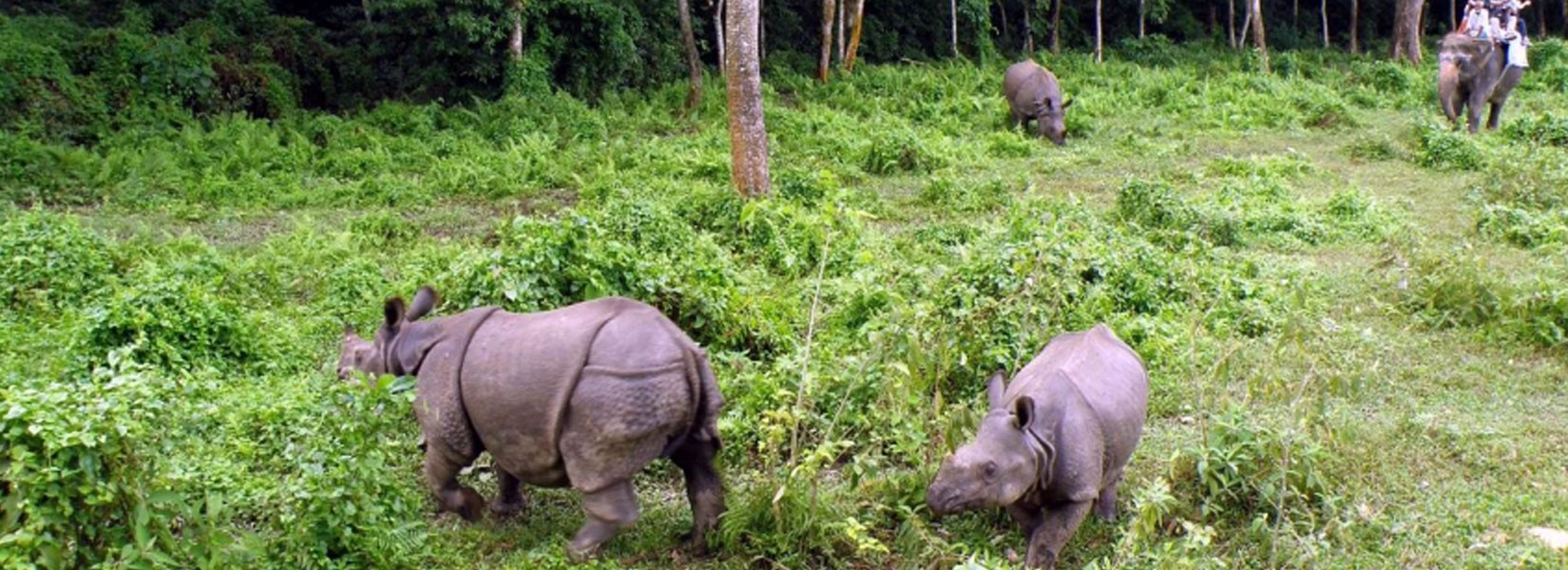Wild Life Jungle Safari