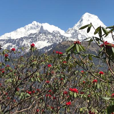 Annapurna Base Camp Pun Hill Trekking