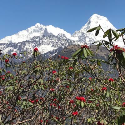 Annapurna Base Camp Pun Hill Trekking